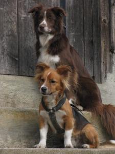 Tedi (krants) ja Pudi (Borderkolli)